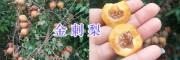 刺梨批发价格-黔西南金刺梨、贵龙刺梨_贵州刺梨销售信息
