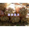 鲜姜批发-曲靖小黄姜销售/云南罗平生姜厂家