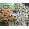 罗平小黄姜收购批加工-13769806195/曲靖姜种销售