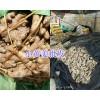 罗平小黄姜、姜种、菜姜,大量现货13769806195