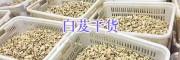 保山三叉白芨苗出售-白芨成品生产
