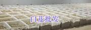 真正的三叉白芨图片-优质白芨干货供应商_云南保山白芨