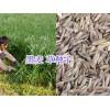 云贵川牧草种子批发-牧场牧草种子销售