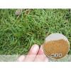 草坪种子销售表:天堂草种-果岭草,早熟禾种子/黑麦草