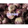 绿化鲜花草种子:波斯菊、雏菊#二月兰、风信子种球