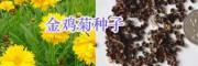 绿化花海设计/草花种子销售大全-园林绿化鲜花种子