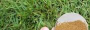 城镇绿化草坪设计-草坪种子类别-江苏草坪种子销售