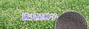 宿迁草花种子零售批发-种植草坪价格_江苏绿化种子供应