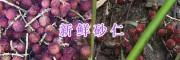 文山新鲜砂仁&优质砂仁成品批发-13887857178