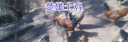 林下土鸡养殖#楚雄山地放养土鸡400-6633-626