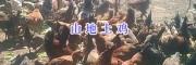 楚雄市土鸡供应商—云南土鸡养殖场400-6633-626