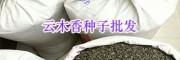 昆明螺蛳湾独定子种子-高出芽率云木香种子批发*田园药业