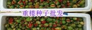 昆明重楼苗销售部:粉质滇重楼种子销售_云南滇重楼种苗供应