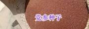 云南党参种子批发报价&丹参种子供应-螺蛳湾药材种子批发