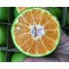 青柚批发-泰国青柚子/红河州香橙销售