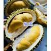 云南红河屏边榴莲/菠萝/西瓜批发