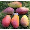 云南芒果产地-红河州芒果销售/屏边菠萝、榴莲价格