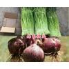 新鲜蒜苔出售-云南蒜苔产地#蒜苔一斤多少钱