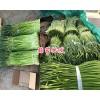 云南蒜苔产地-剑川蒜苔、独蒜批发