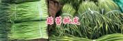 大理蒜苔行情/剑川蒜苔供应价格-紫皮大蒜蒜苔