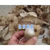 云南鸡枞批发供应-13628889021-丽江鸡枞