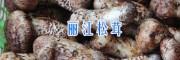 迪庆香格里拉松茸在哪买?丽江拉松茸供应15969392580