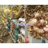 云南菜姜批发-罗平菜姜销售/菜姜姜种供应