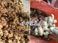最新云南干姜块供应/批发报价@罗平干姜无硫片价格