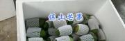 保山老品种芒果包邮—15025067483