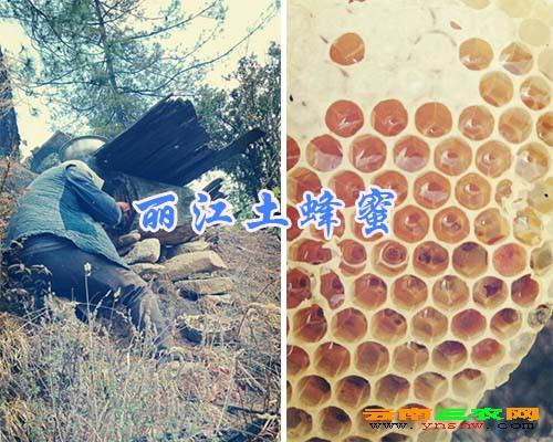 丽江土蜂蜜