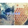 丽江哪里土蜂蜜多?蜜蜂养殖场蜂蜜直销400-6633-626