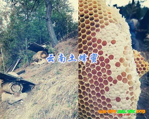 云南土蜂蜜