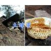 丽江特产蜂蜜、纯正土蜂蜜-一手货源