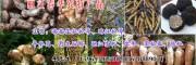 羊肚菌一斤价格2018#云南特产羊肚菌15969392580