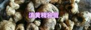 滇黄精鲜货块茎苗#供应普洱、文山黄精种苗_红河黄精种植