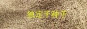 哪有独定子除草剂#金铁锁抗病营养液使用方法
