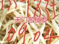 云南天门冬种苗:丽江大天冬苗批发-天冬栽培技术