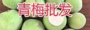 云南青梅大货销售-大理剑川青梅子—13987287263