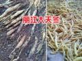 天冬种子鲜货-云南丽江天冬苗销售-18760976082
