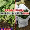 云南花卉种苗批发价格/图片/品牌