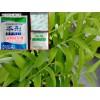 黄精地里用什么除草剂|黄精可以打除草剂吗?
