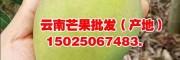 云南优质大芒果-15025067483/产地保山芒果基地直销