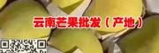 云南芒果产地—芒果批发商—芒果种植品种