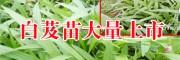 云南白芨种苗 |云南省白芨苗批发厂家[免费技术指导]