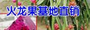 火龙果种植技术_火龙果种植方法