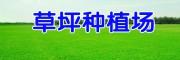 云南安宁草坪种植场_草坪多少钱一平方?
