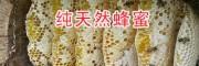 云南丽江纯正土蜂蜜-新开割蜂蜜销售-15012240531