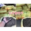 云木香种子厂家-大理云木香种子批发商