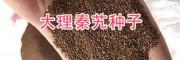 秦艽苗移栽时间_云南秦艽种子销售-13987235380