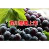 云南宾川葡萄_宾川黑葡萄多少钱一斤?